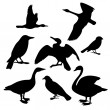Stok Vektör: Collection of birds. Vector illustration
