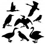 kuşlar topluluğu. vektör çizim — Stok Vektör