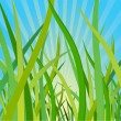 Ecological background with a grass - Stock Vector