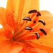 Royalty-Free Stock Photo: Abstract close up  of orange lily
