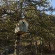 Huge wooden nestling box — Foto Stock