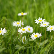 Bright nice summer meadow — Stock Photo