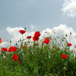 Lots of poppies on the hill over blue sk — Stock Photo