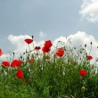 Lots of poppies on the hill over blue sk — Stock Photo #1143822