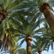 Постер, плакат: Palm trees shady grove