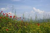 Escena rural idílico con brillantes del prado — Foto de Stock