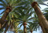 Palm trees shady grove — Stock Photo