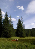 Red cow on the clearing in the forest — Stok fotoğraf