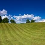 Nice rural landscape over blue sky — Stock Photo #1154430