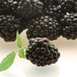 One fresh ripe blackberry — Stock Photo