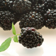 Stock Photo: One fresh ripe blackberry