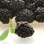 One fresh ripe blackberry — Stock Photo