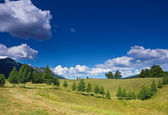 Rural landscape with a row of birches — Stock Photo