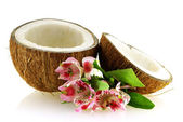 Two pieces of ripe coconut with flowers — Stock Photo