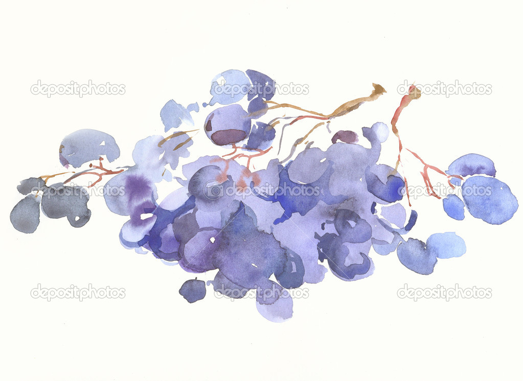 A picture is a water-colour of berry of vine — Stock Photo #1247085