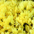 Yellow flowers - Foto de Stock  