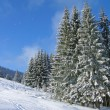 Winter in Carpathian mountain - Stock Photo