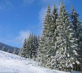 Winter in Carpathian mountain — Stock Photo
