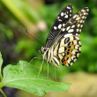 Butterfly in Tropical Garden — Stock Photo