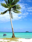Coconut palm on the beach — Stockfoto