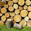 Pile of firewood on the grass — Stock Photo