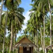 Beach with Palms and Huts — Stock Photo