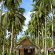 Stock Photo: Beach with Palms and Huts