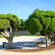 Odd-shaped trees in Madrid park — Stock Photo