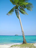 Coconut tree on the tropical beach — Foto de Stock