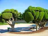 Odd-shaped trees in Madrid park — Stockfoto