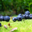 Blueberry on the green moss — Stock Photo