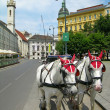 Tourist horses in the street of Vienna — Stockfoto