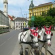 Tourist horses in the street of Vienna - Stock Photo