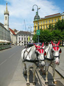 Tourist horses in the street of Vienna — Foto de Stock