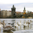 Stock Photo: Charles Bridge, Prague, Czech Republic