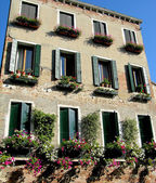 Italian windows with flowers, Venice — Stock Photo