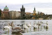 Charles bridge, Praga, Repubblica Ceca — Foto Stock
