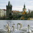 Charles Bridge, Prague, Czech Republic — Stock Photo #1575714