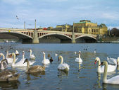 Vltava river, Prague, Czech Repub — Stock Photo