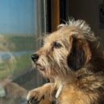 Funny dog — Stock Photo #1119657