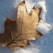 Oak leaf on the snow — Stock Photo