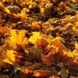 Autumn leaves lie on the earth - Stock Photo