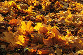 Autumn leaves lie on the earth — Stock Photo