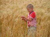 Wheat in the autumn — Stock Photo