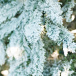Fur-tree covered with hoarfrost — Stockfoto