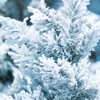 Fur-tree covered with hoarfrost — Stock Photo #1345082