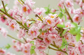 Petals of a blossoming tree — Stock Photo
