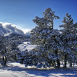 Stock Photo: Winter landscape A