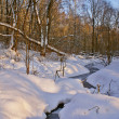 Stock Photo: Winter forest A