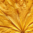 Royalty-Free Stock Photo: Oak leaf background